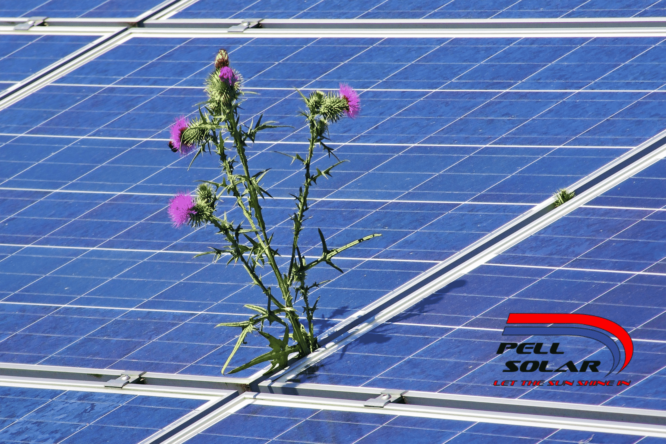 Caring for your Solar Panels
