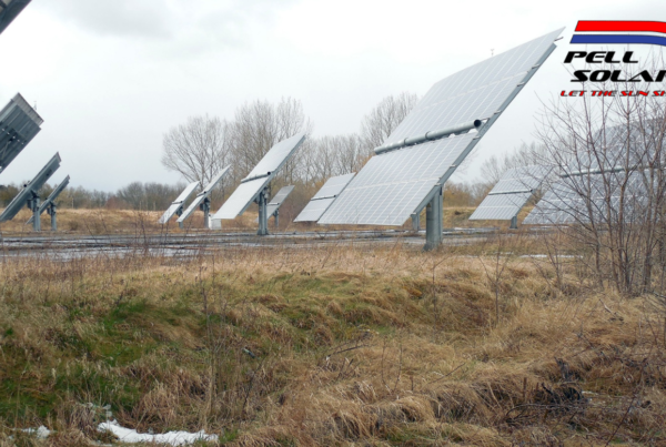 A grassy field during the winter with leafless trees and solar panels.